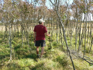 Rich hiking through grass, grove of trees