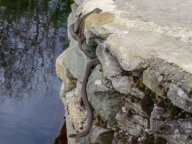 Snakes on the bridge