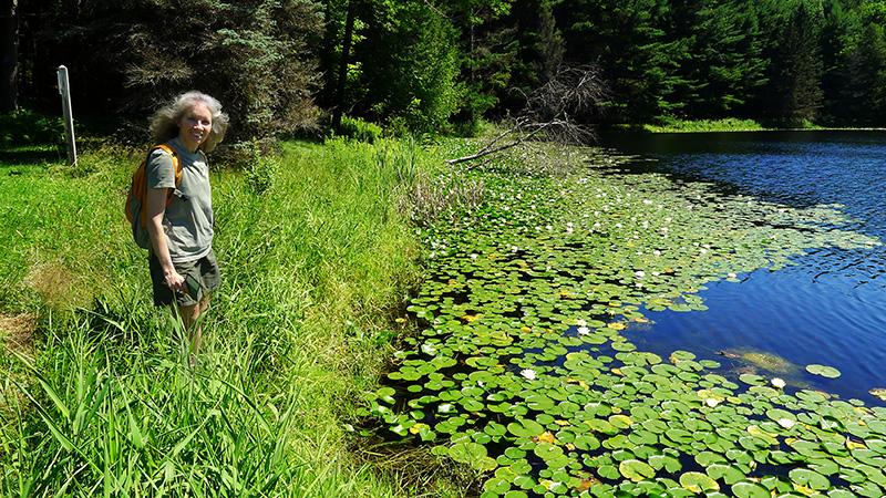 Lilypads at Homestead Pond