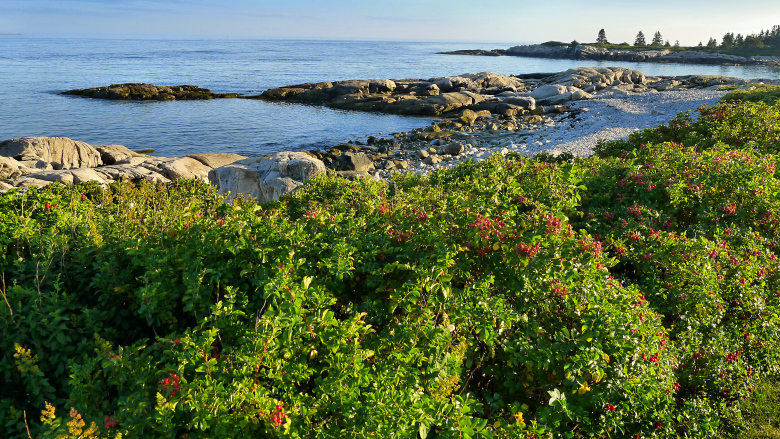 Colorful scenery at Schoodic