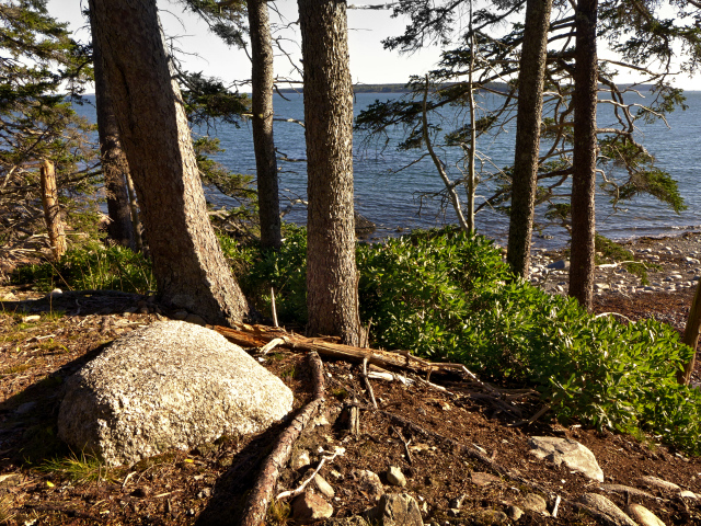Along the Old Bass Harbor Lighthouse Trail