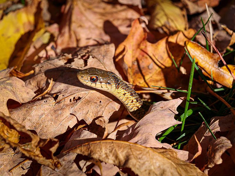 Sunlit snake